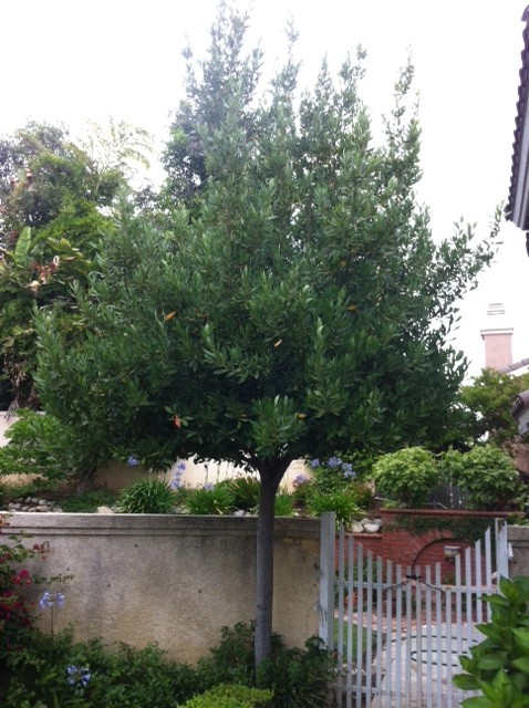 Plum Tree Symbolism Lz Marie