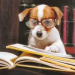 dog readingbook