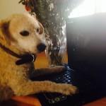Dog Days of Writing